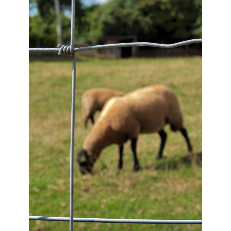 Grillage Prairie Medium 1M20 / 50M à Mouton